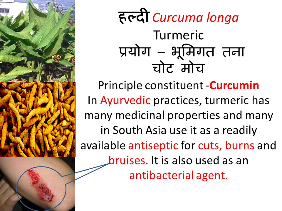 हल्दी Curcuma longa Turmeric प्रयोग – भूमिगत तना चोट मोच Principle constituent -Curcumin In Ayurvedic practices, turmeric has many medicinal properties and many in South Asia use it as a readily available antiseptic for cuts, burns and bruises.