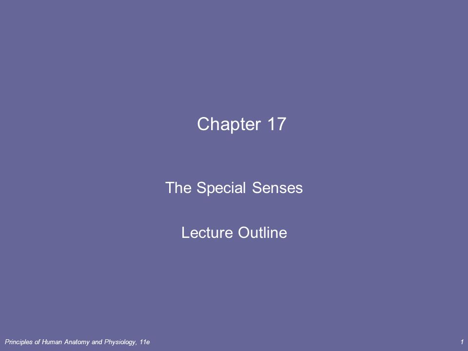 Fantastisch Anatomy And Physiology Special Senses Answer Key ...