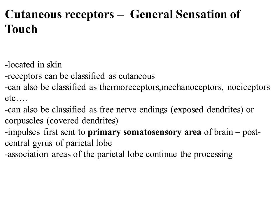 general cutaneous sensations Full text abstract: cutaneous sensation deteriorates with age  as tingling,  pins and needles, or any general discomfort caused by the cuff.