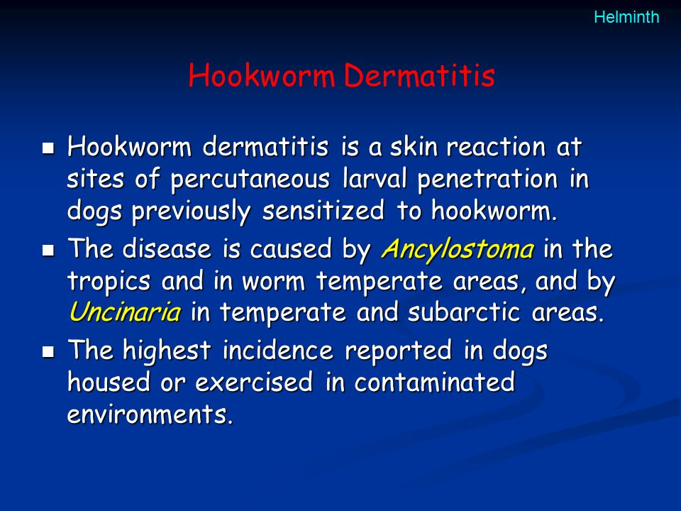 hookworm dermatitis in dogs Revolution vet-grade protection revolution provides essential vet-grade protection against fleas, heartworm and other nasties did you know that most flea treatments contain industrial agricultural pesticides.