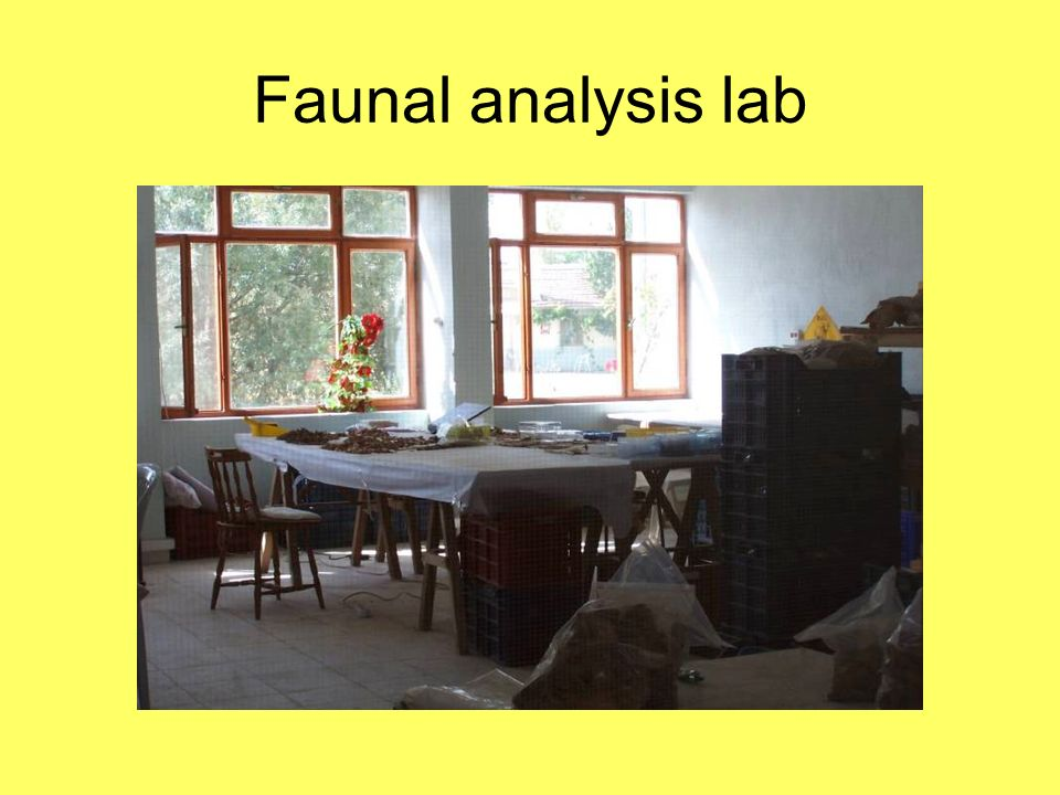 Faunal analysis lab