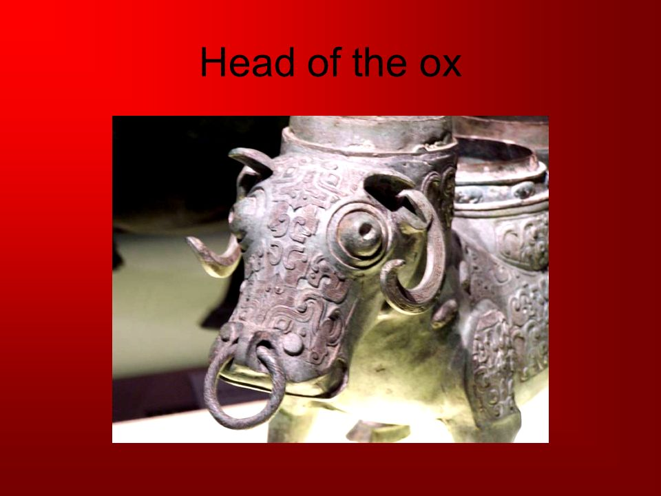 Head of the ox