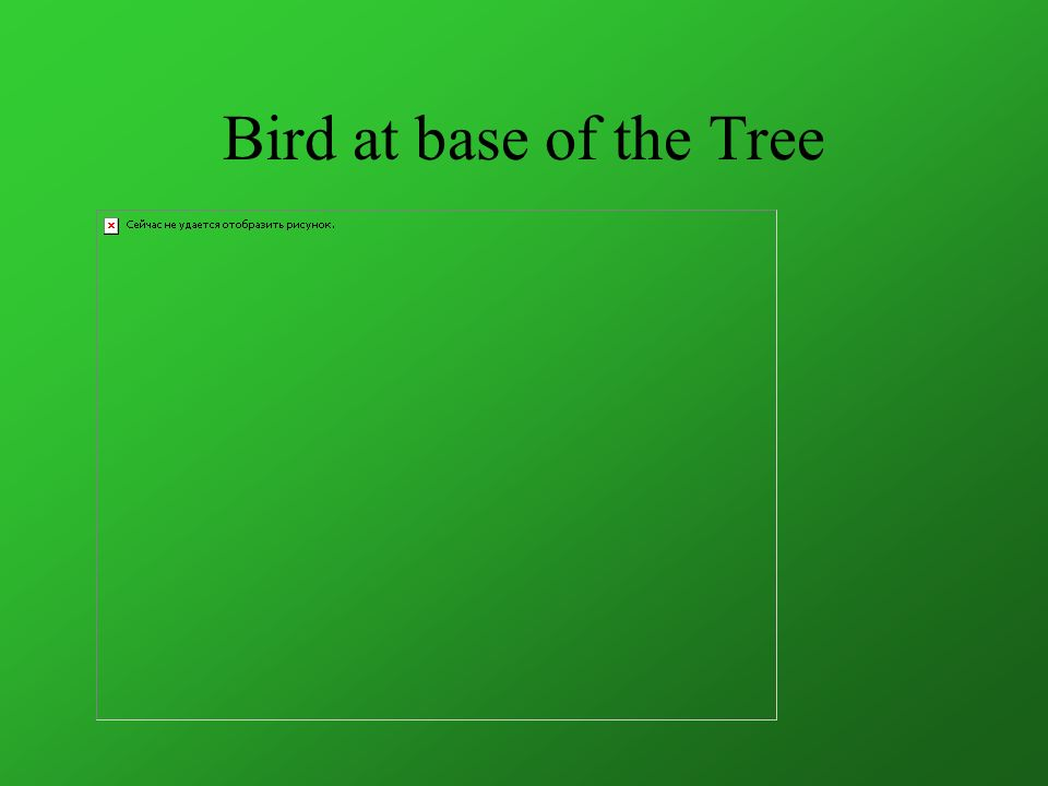 Bird at base of the Tree