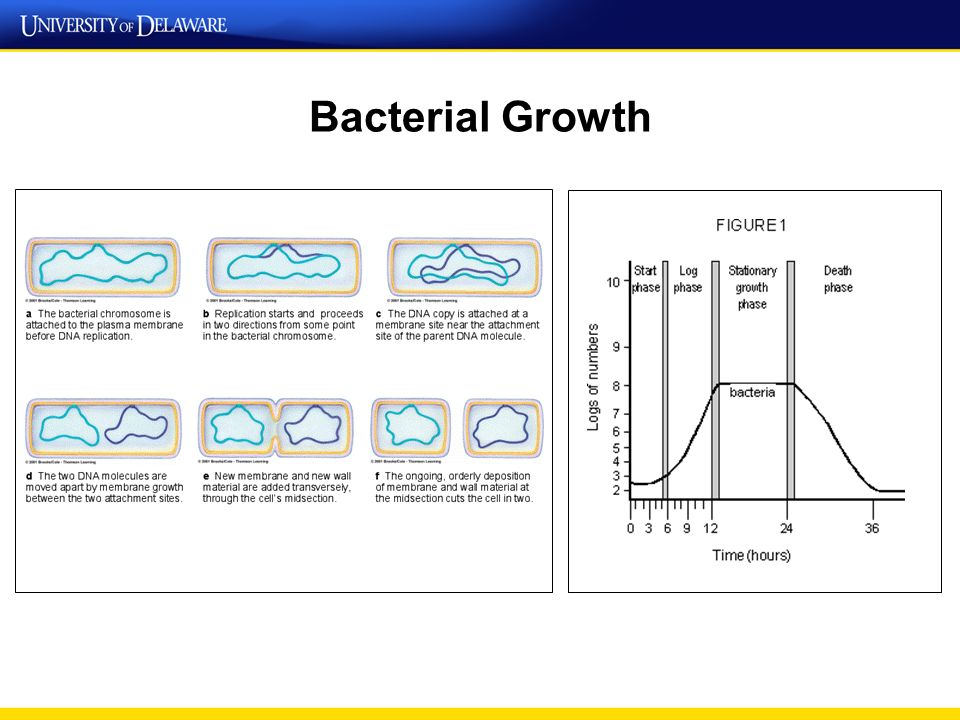 ph and microbial growth