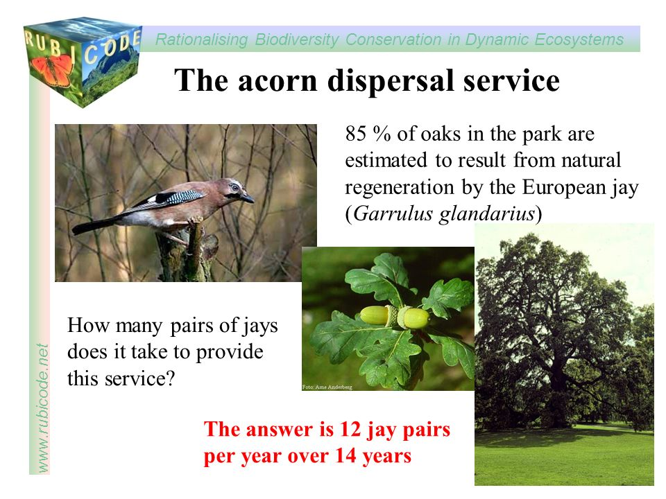 The acorn dispersal service