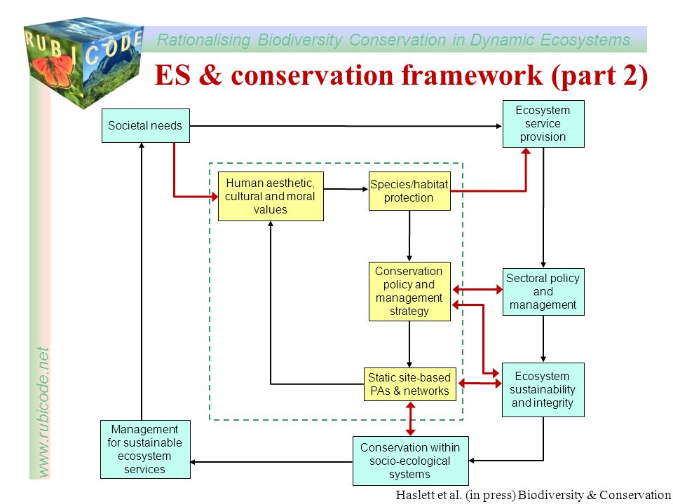 ES & conservation framework (part 2)