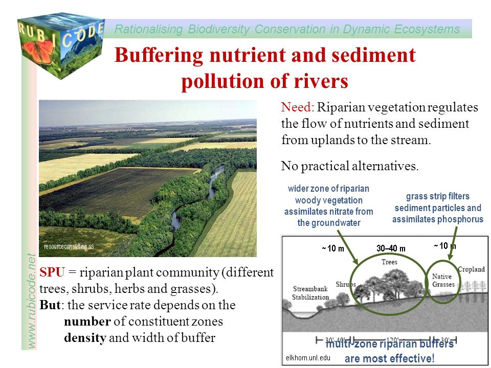 Buffering nutrient and sediment pollution of rivers