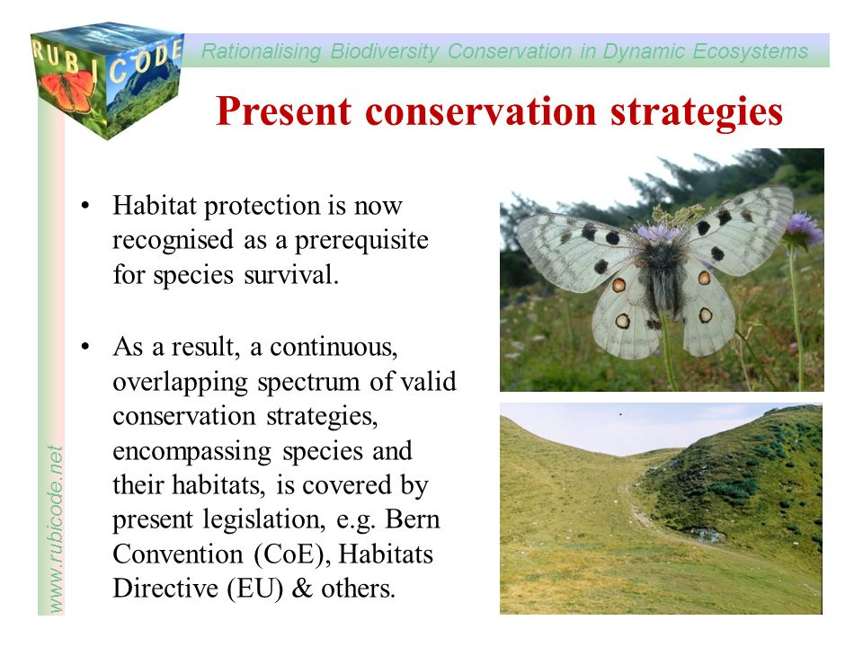 Present conservation strategies