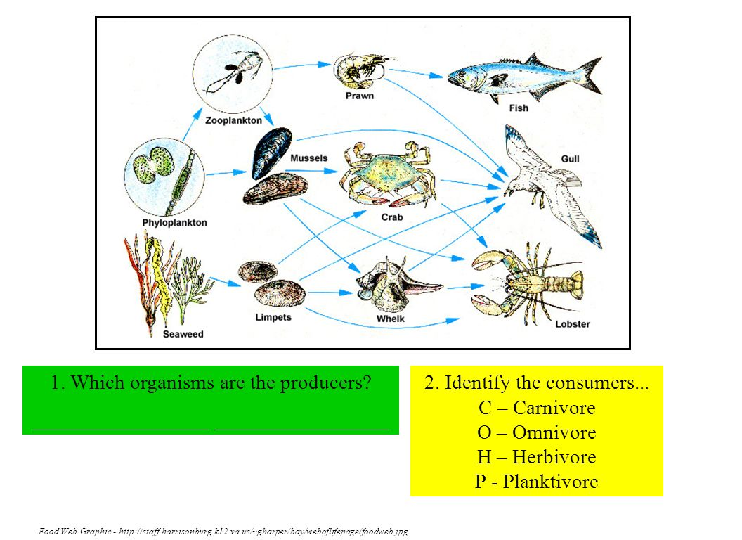 1. Which organisms are the producers