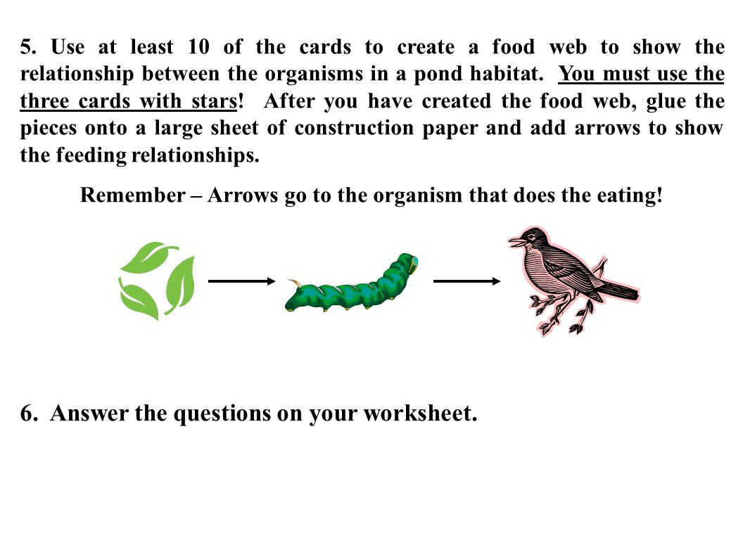 Remember – Arrows go to the organism that does the eating!