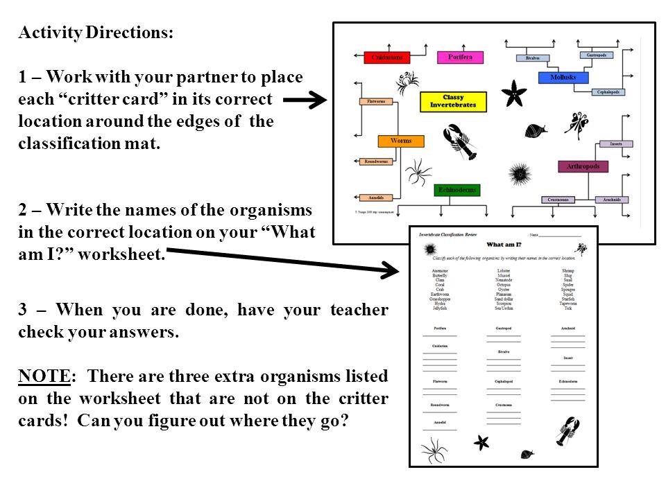 Classy Invertebrates Can you meet the challenge ppt download – Invertebrates Worksheet