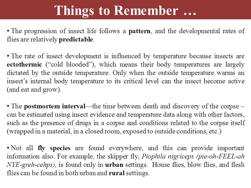 Things to Remember … The progression of insect life follows a pattern, and the developmental rates of flies are relatively predictable.