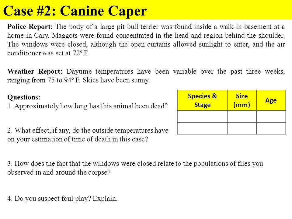 Case #2: Canine Caper