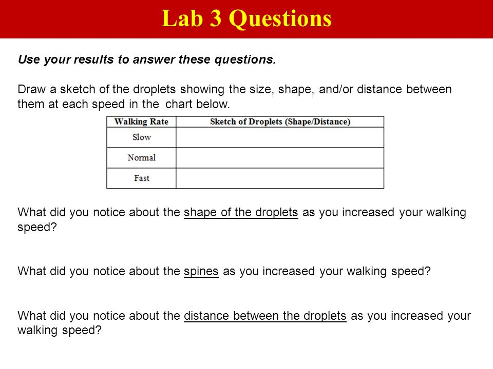 Lab 3 Questions Use your results to answer these questions.