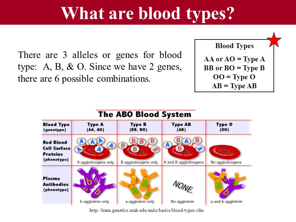 AA or AO = Type A BB or BO = Type B OO = Type O AB = Type AB