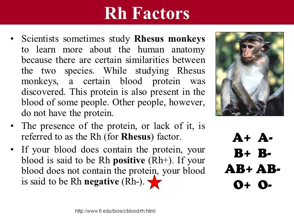 Rh Factors A+ A- B+ B- AB+ AB- O+ O-