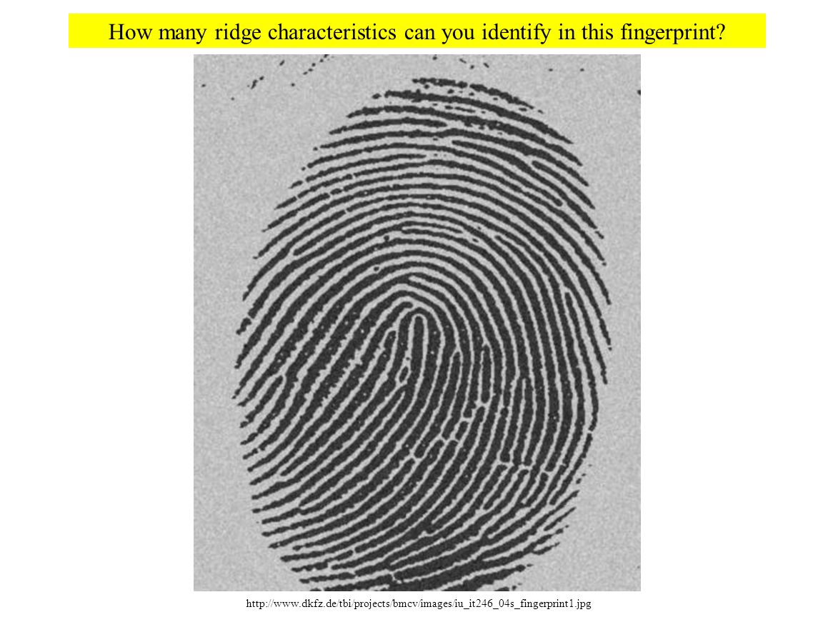 How many ridge characteristics can you identify in this fingerprint