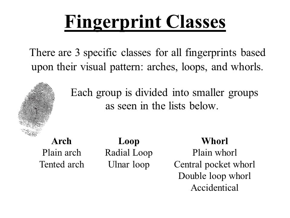 Fingerprint Classes There are 3 specific classes for all fingerprints based. upon their visual pattern: arches, loops, and whorls.