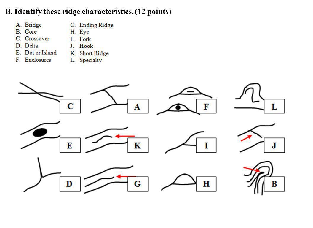 B. Identify these ridge characteristics. (12 points)