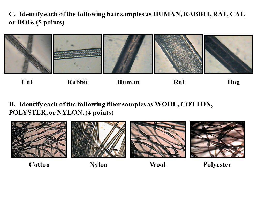 C. Identify each of the following hair samples as HUMAN, RABBIT, RAT, CAT, or DOG. (5 points)