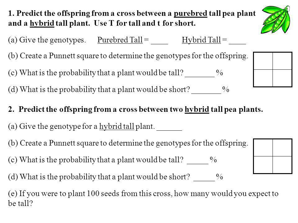 1. Predict the offspring from a cross between a purebred tall pea plant and a hybrid tall plant. Use T for tall and t for short.
