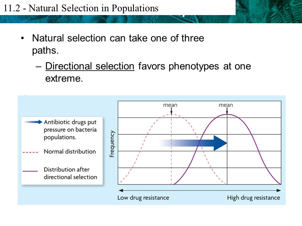 What Criteria For Evolution By Natural Selection