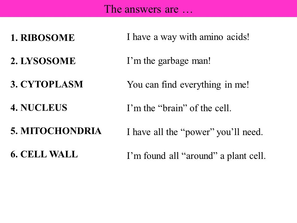 The answers are … I have a way with amino acids! 1. RIBOSOME