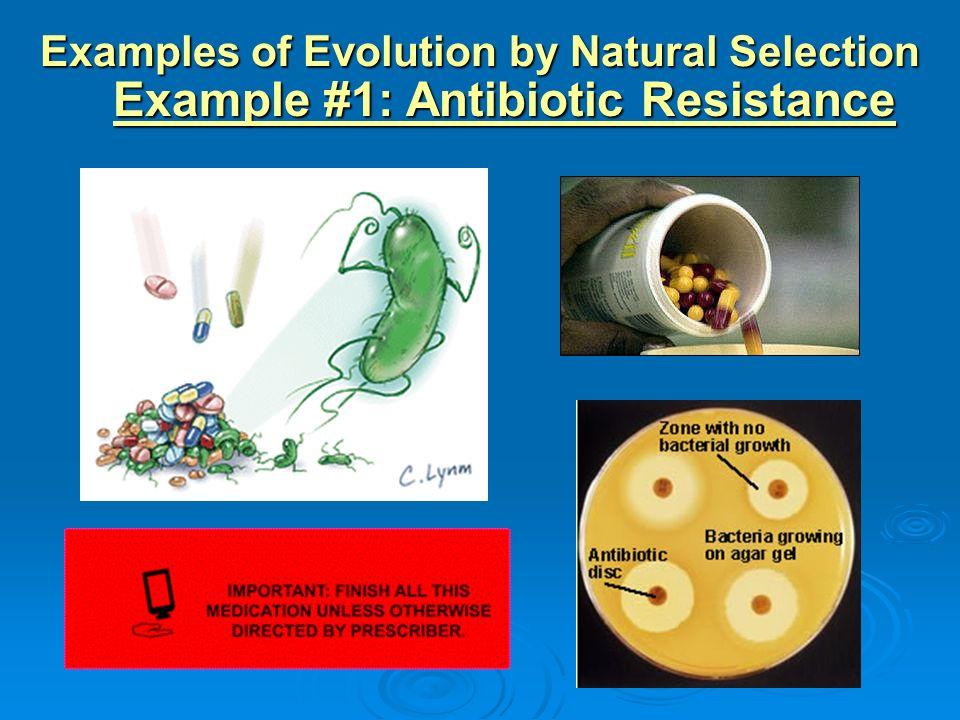 evolution of antibiotic resistance Evolution of antibiotic resistant evolution and ecology of antibiotic resistance - evolution and ecology of antibiotic resistance background time scale.