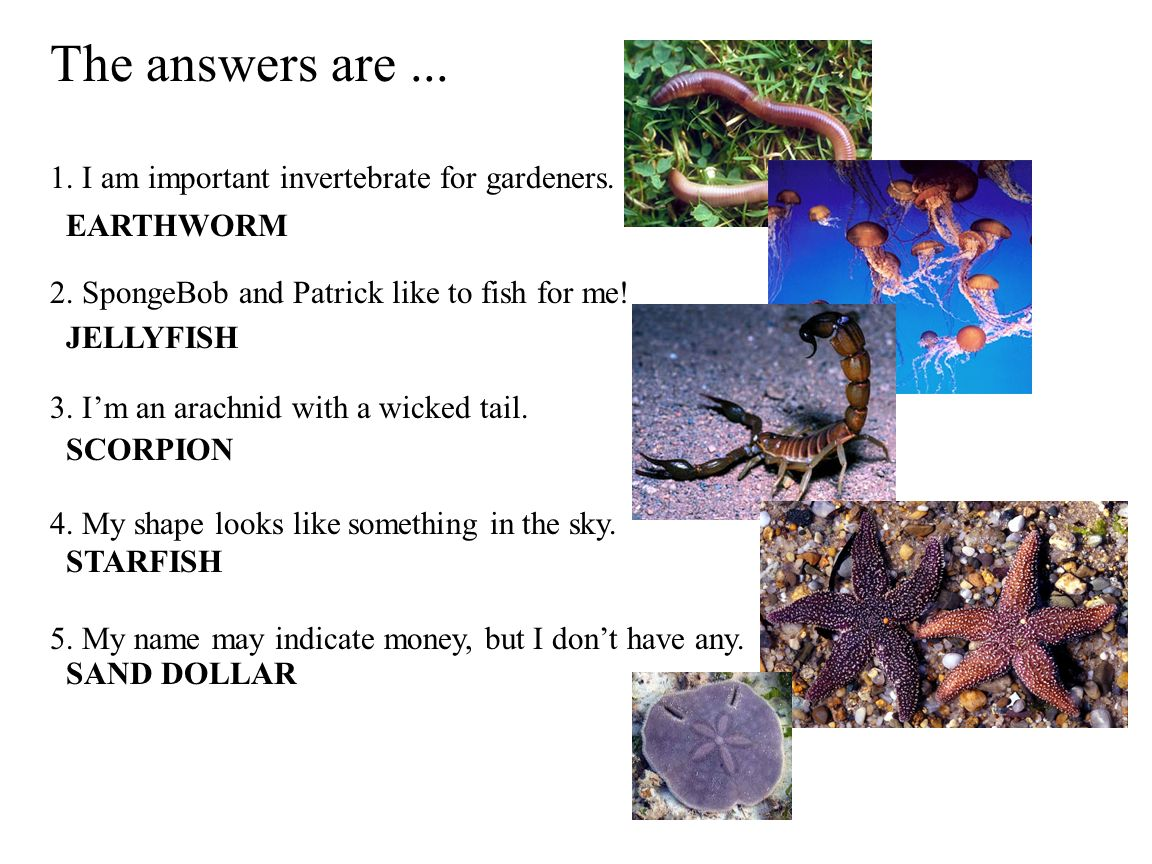 The answers are ... 1. I am important invertebrate for gardeners.