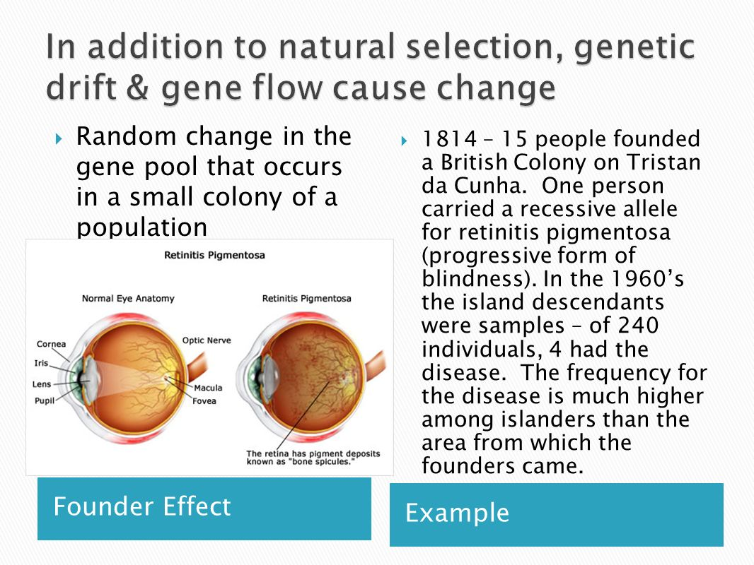In addition to natural selection, genetic drift & gene flow cause change