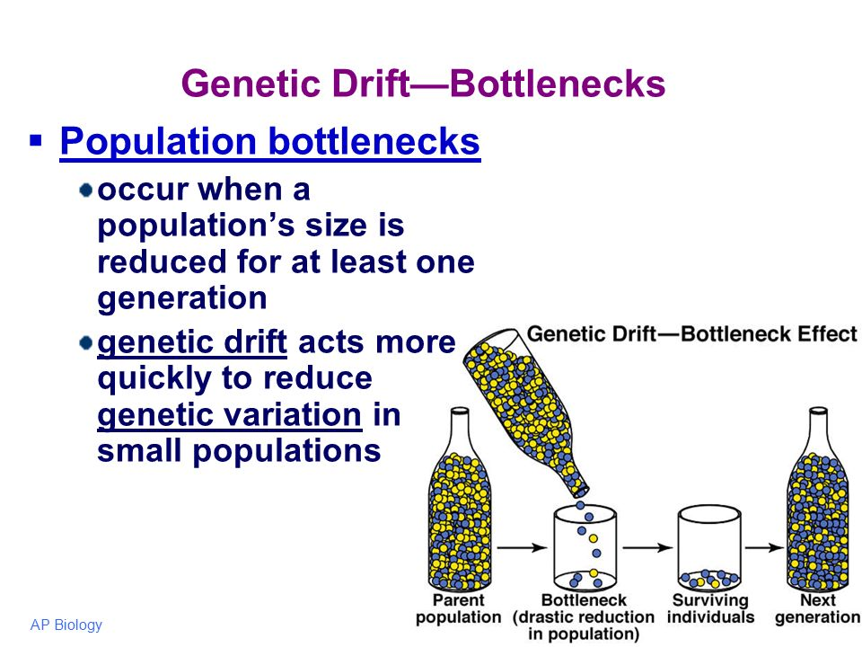 definition of bottleneck A population bottleneck (or genetic bottleneck) is a sharp reduction in the size of a population due to environmental events (such as earthquakes, floods, fires, disease, or droughts) or human activities (such as genocide.