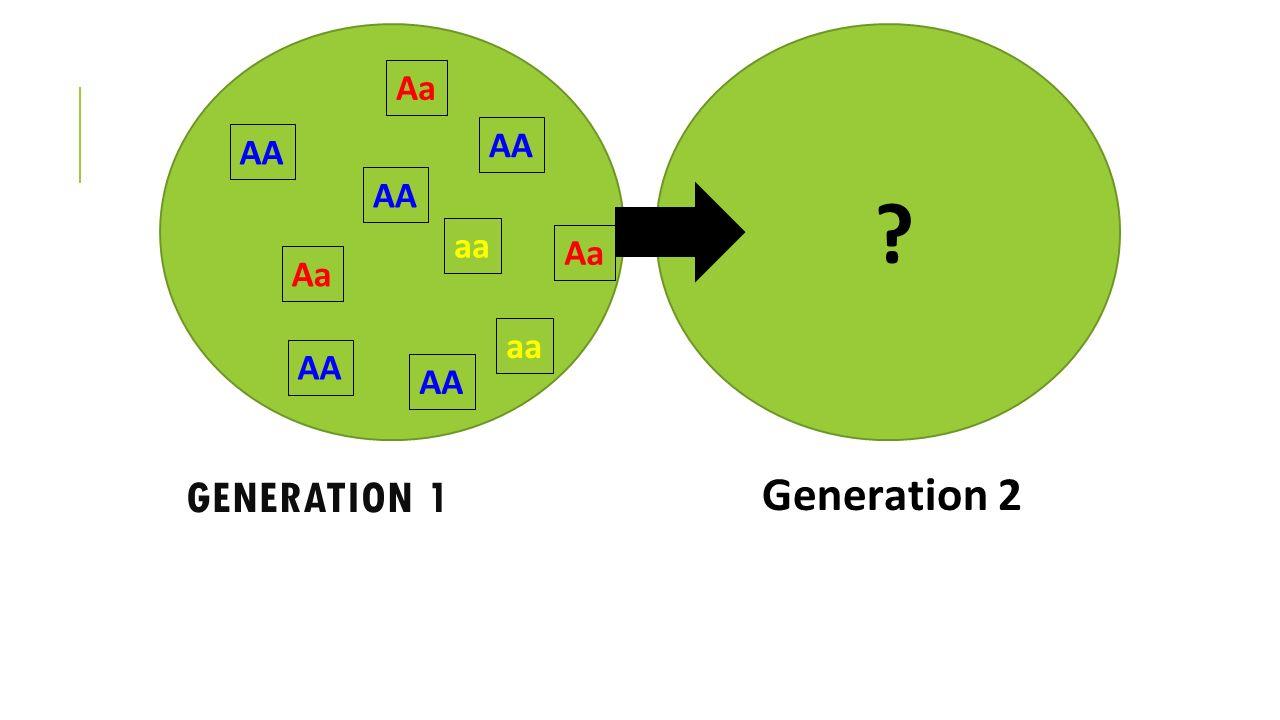 AA Aa aa Generation 1 Generation 2
