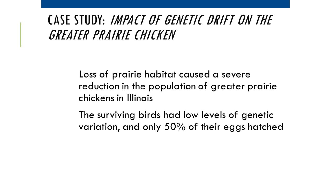 Case Study: Impact of Genetic Drift on the Greater Prairie Chicken