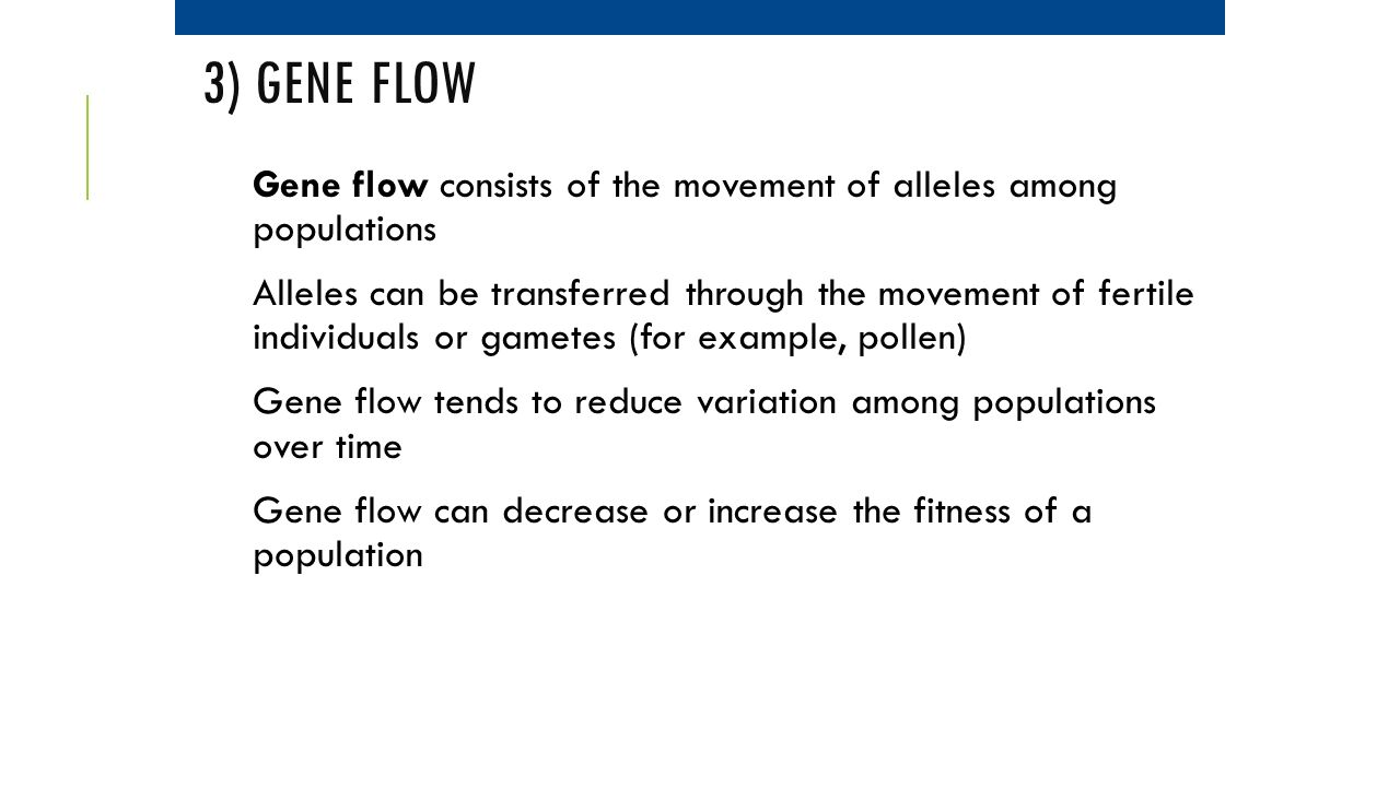 3) Gene Flow Gene flow consists of the movement of alleles among populations.