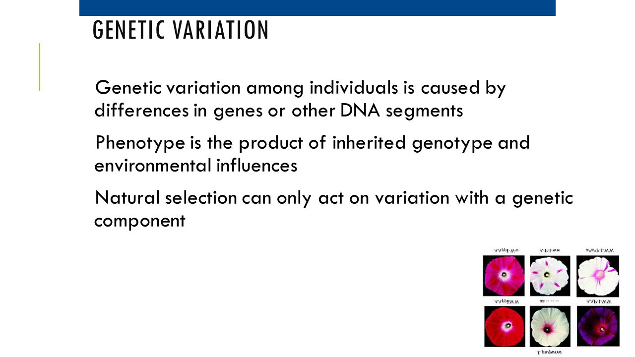 Genetic Variation Genetic variation among individuals is caused by differences in genes or other DNA segments.