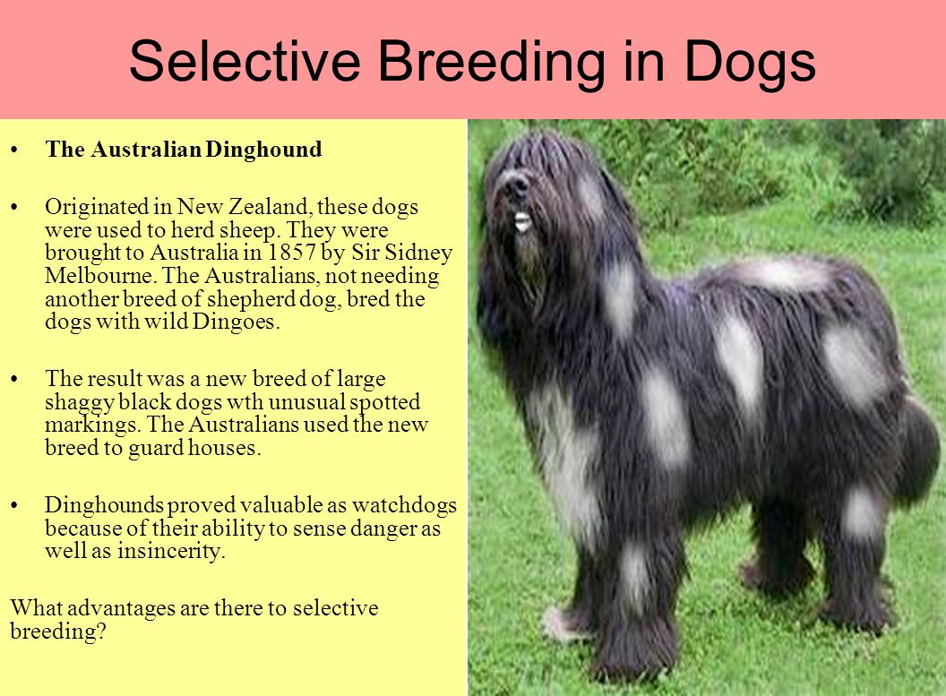 Dog Breeding For A Living