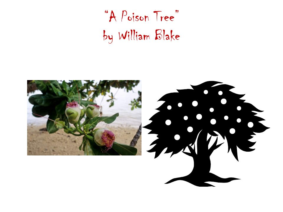 a poison tree poem by william A poison tree by william blake i was angry with my friend: i told my wrath, my  wrath did end i was angry with my foe i told it not, my wrath did grow.