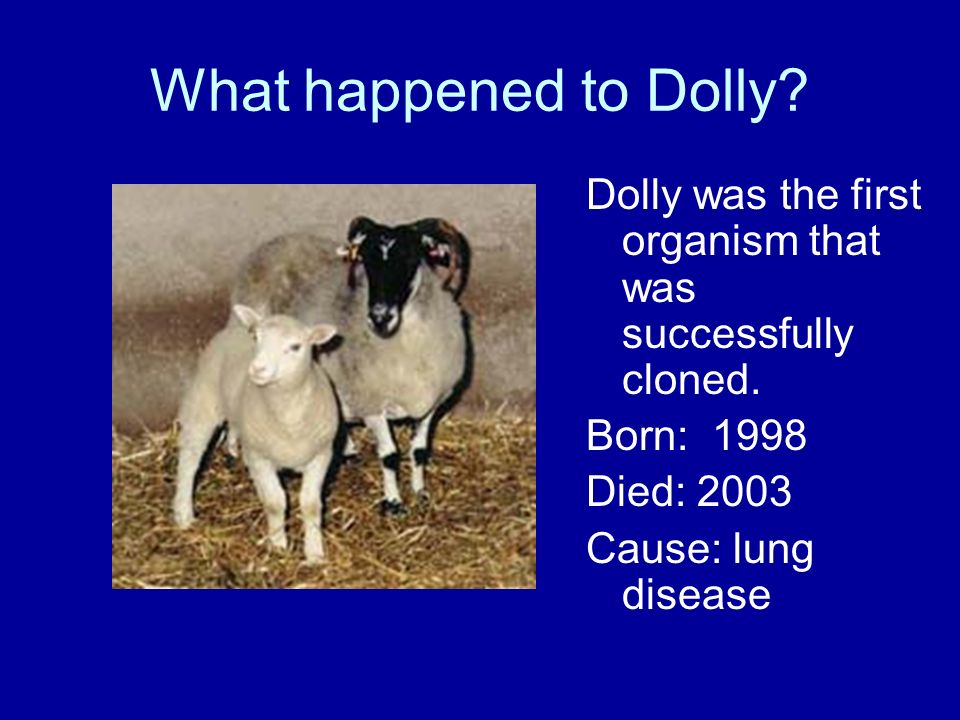What happened to Dolly Dolly was the first organism that was successfully cloned. Born: Died: