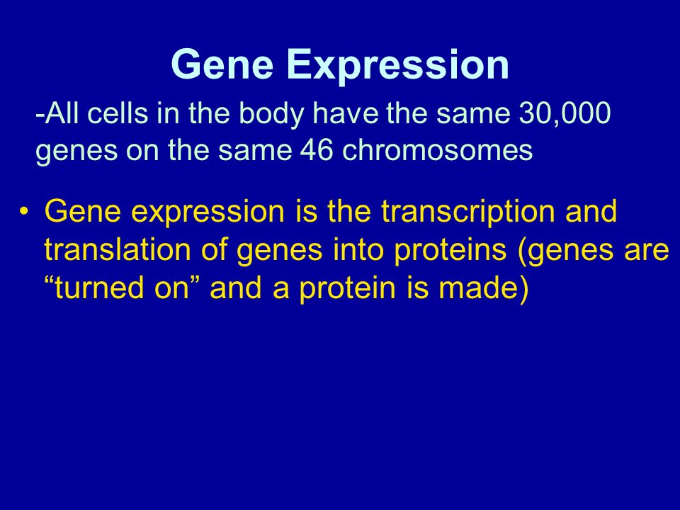Gene Expression -All cells in the body have the same 30,000 genes on the same 46 chromosomes.