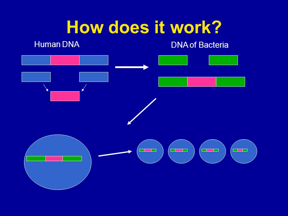 How does it work Human DNA DNA of Bacteria