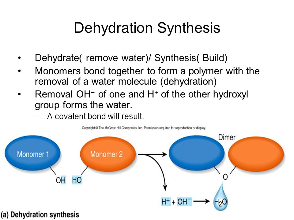 dehydration sythesis Synthesis of proteins proteins are made from amino acids combined together one after another in a particular sequence by intermolecular dehydration reactions to form.