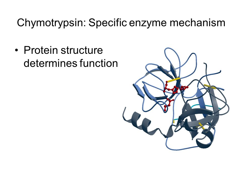 Chymotrypsin: Specific enzyme mechanism