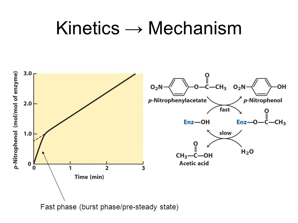 Kinetics → Mechanism Fast phase (burst phase/pre-steady state)