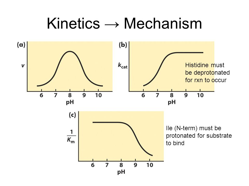 Kinetics → Mechanism Histidine must be deprotonated for rxn to occur