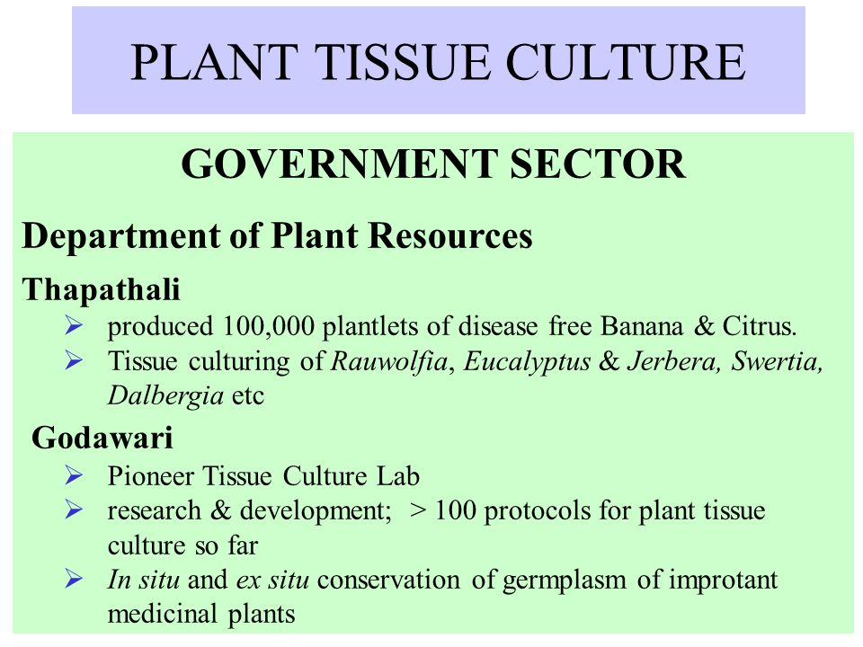 PLANT TISSUE CULTURE GOVERNMENT SECTOR Department of Plant Resources