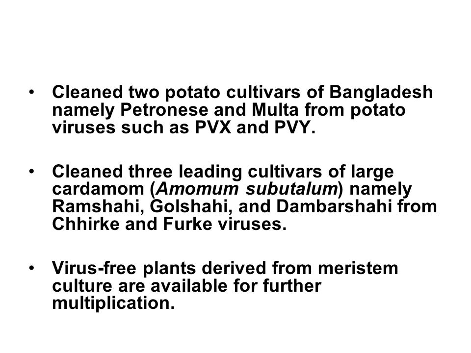 Cleaned two potato cultivars of Bangladesh namely Petronese and Multa from potato viruses such as PVX and PVY.