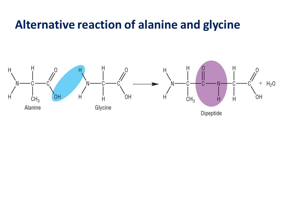 Introduction to proteins and amino acids article  Khan