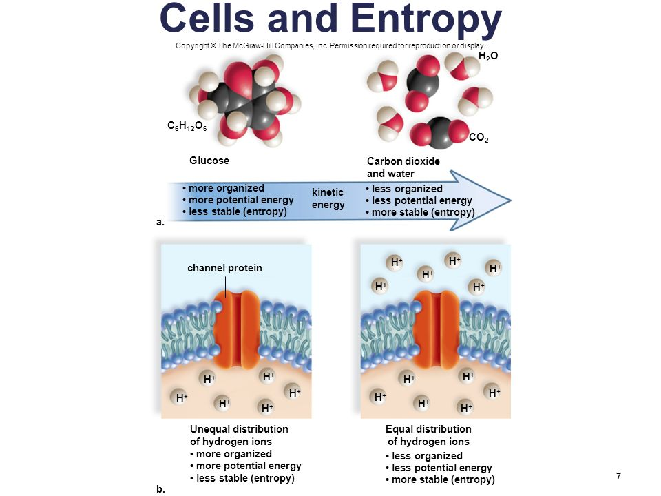 ap biology cells have kinetic energy Kinetic energy is energy that something has because it is in motion  by the way  in biology we measure energy in terms of a unit called the calorie a calorie is.