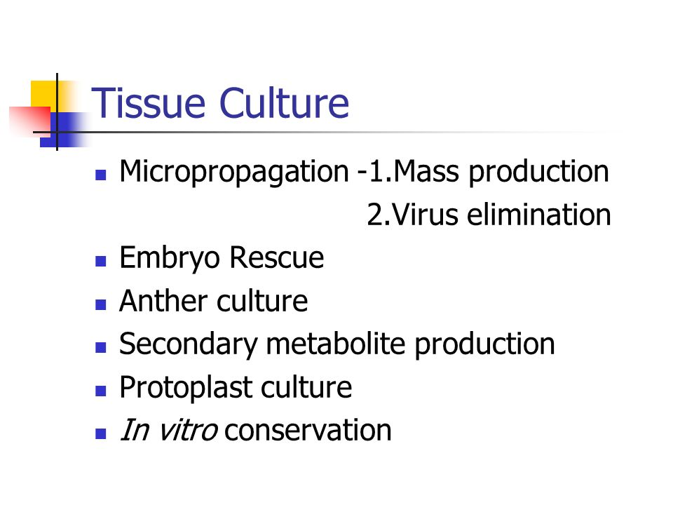 Tissue Culture Micropropagation -1.Mass production 2.Virus elimination