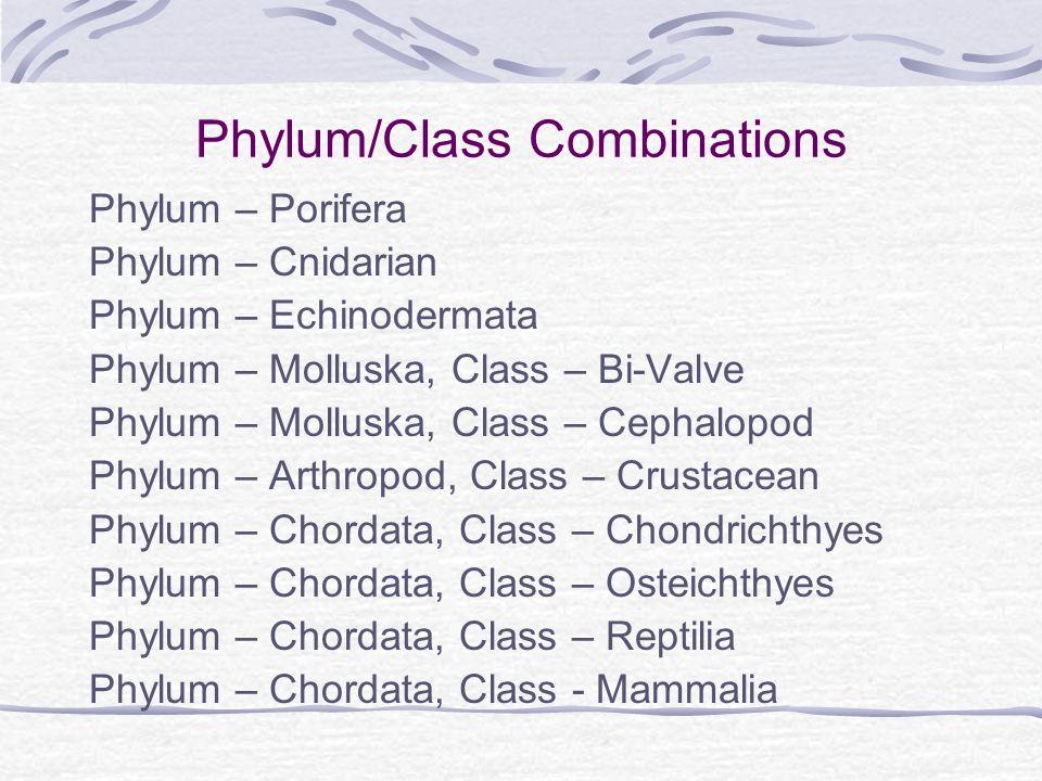 Phylum/Class Combinations